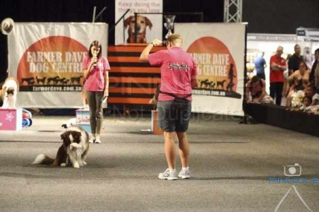 Dog Lovers Show 8 Nov 2014 - The Wonderdogs