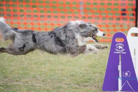 Flyball Nationals 2016 - 17 & 18 September 2016