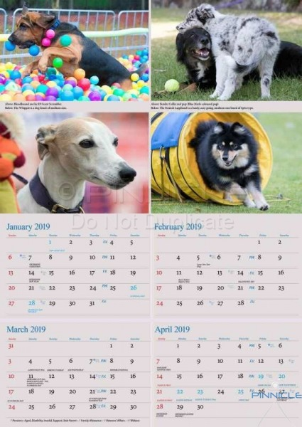 Dogs of Australia Calendar 2018 | backinner.jpg