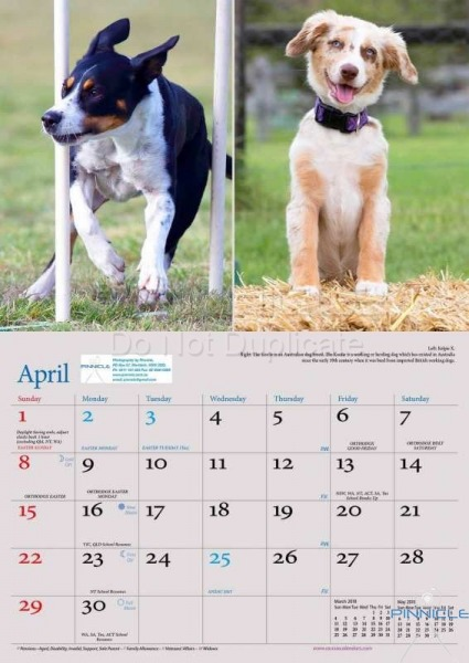 Dogs of Australia Calendar 2018 | APRIL.jpg