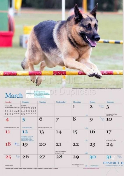 Dogs of Australia Calendar 2018 | MARCH.jpg
