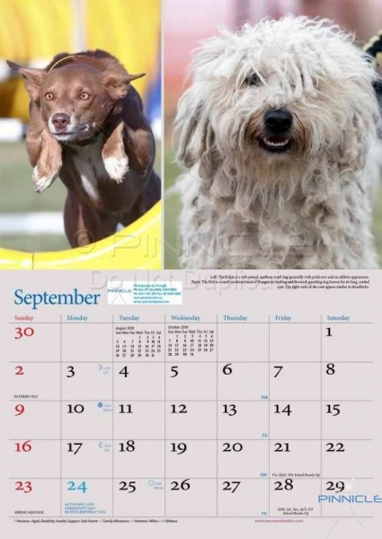 Dogs of Australia Calendar 2018 | sept.jpg