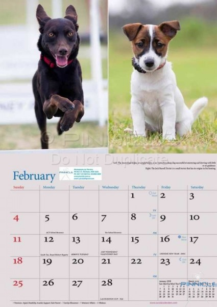 Dogs of Australia Calendar 2018 | FEB.jpg