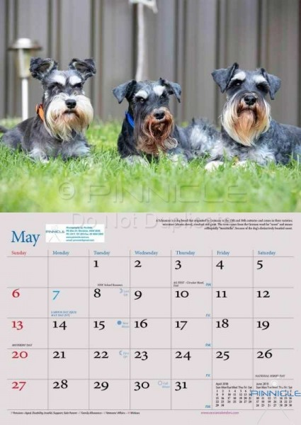 Dogs of Australia Calendar 2018 | MAY.jpg