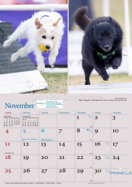 Dogs of Australia Calendar 2018 | nov.jpg