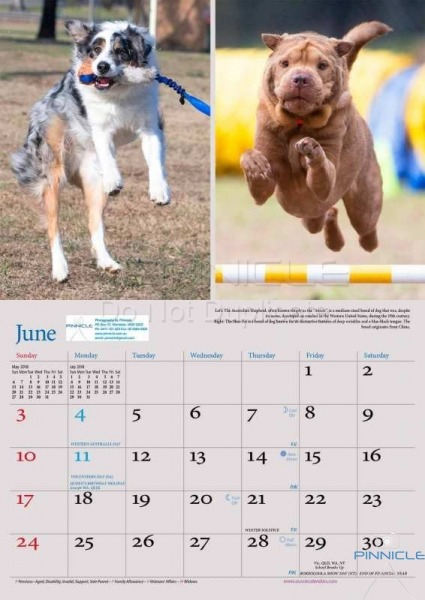 Dogs of Australia Calendar 2018 | june.jpg