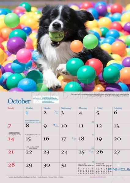 Dogs of Australia Calendar 2018 | oct.jpg