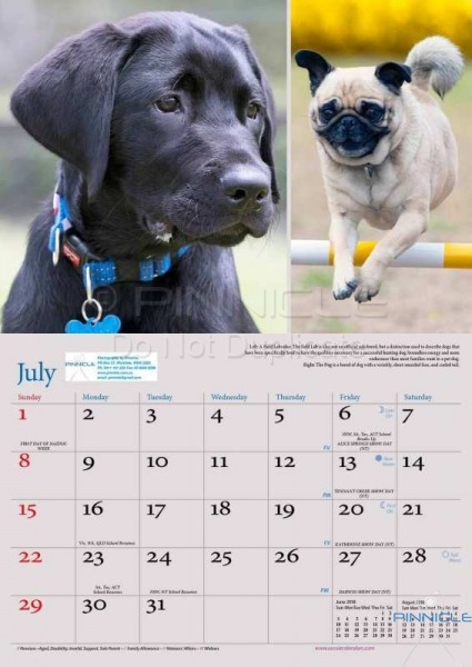 Dogs of Australia Calendar 2018 | july.jpg